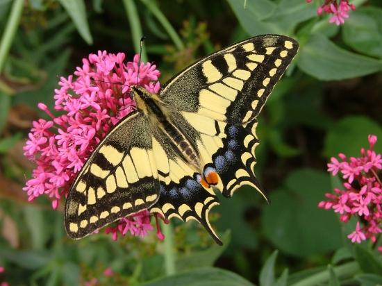 papillons signe de libert. Black Bedroom Furniture Sets. Home Design Ideas